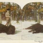 1898 Last Buffalo